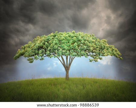 Umbrella shaped tree - environmental protection concept - stock photo