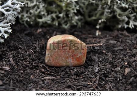 Unakite on forest floor - stock photo