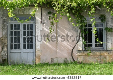 Unattended Grapevines - grape vines overgrowing an abandoned french country house - stock photo