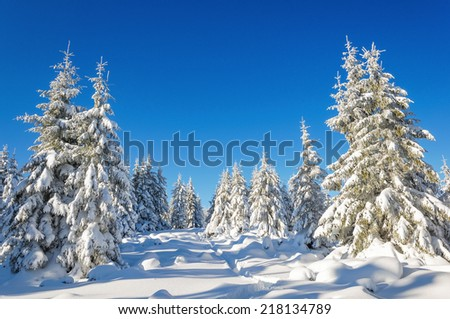Unbeliavable frosty morning in the snow capped mountains - stock photo