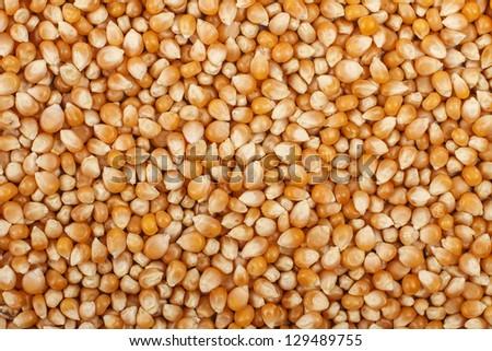 Uncooked Popcorn Texture - stock photo