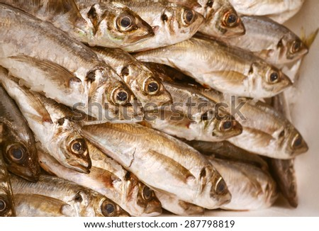 Uncooked trout with other kinds of fish in ice - stock photo
