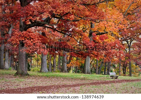 Under Autumn Oaks A path beckons hikers to rest and enjoy the autumn colors at The Morton Arboretum, Lisle, Illinois. - stock photo