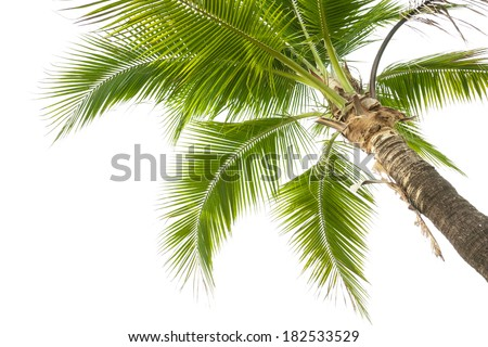 Under coconut tree on the white background. - stock photo