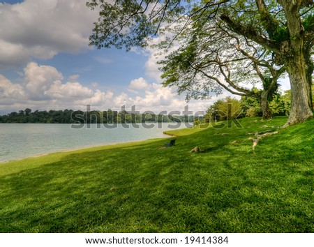 Under Large Tree's Canopy - stock photo