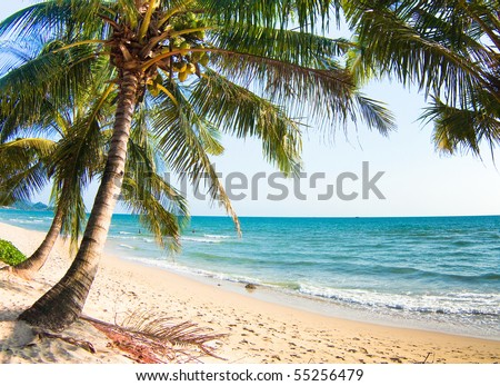 Under palm, near water - stock photo