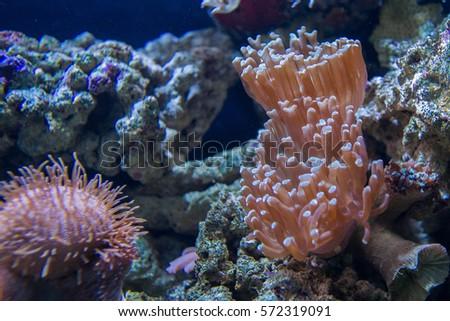 under sea coral