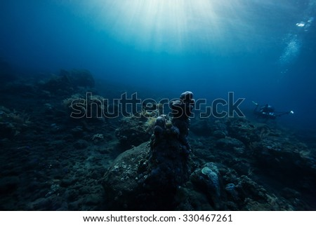 under the sea - stock photo