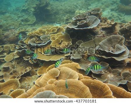under the sea  - stock photo