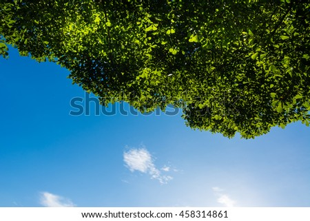 Under the shade,Lines of green trees.