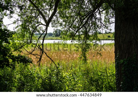 Under the shade of tree near a lake in summer, Milton Keynes, UK - stock photo