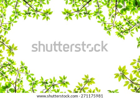 under the tree branch with green leaf view