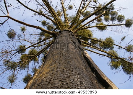 Under tree with burnt bark - stock photo