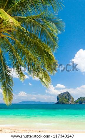 Under Trees Idyllic Coast - stock photo