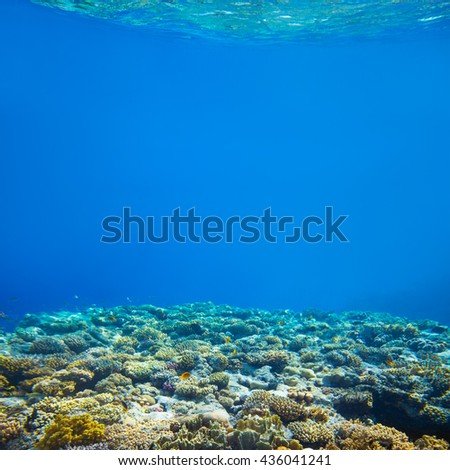 Under water coral reef and tropical fish background - stock photo