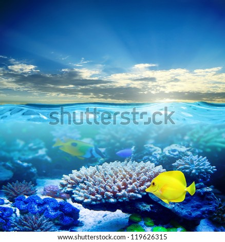 Under water tropical sea life in sunset light - stock photo