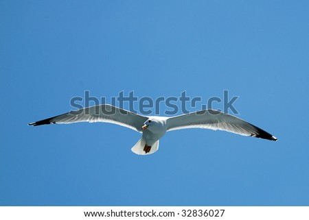 Underneath a flying seagull with wings spread open