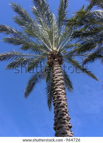 underneath a tropical florida palm tree - stock photo
