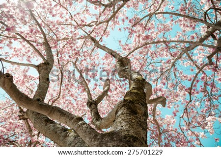 Underneath the canopy of a large magnolia tree. - stock photo