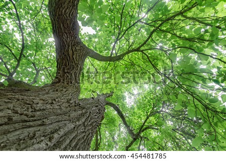 Mature natural tree pictures