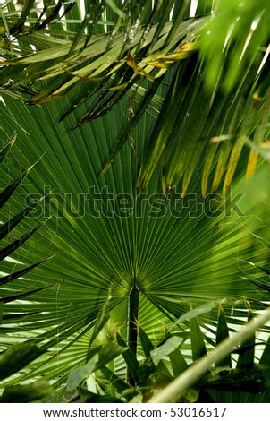 Underneath the palm leaves in spring