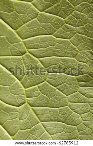 Underside of comfrey leaf in close-up - stock photo