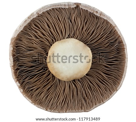 Underside of mushroom isolated on white with clipping path - stock photo