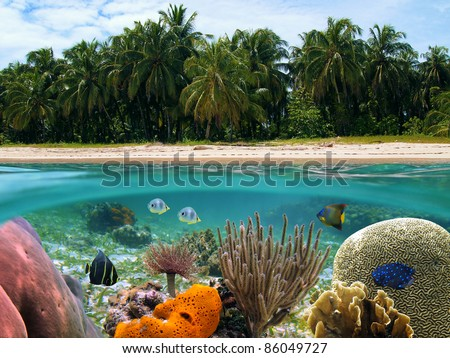 Underwater and surface view of a tropical beach and coconut trees in the Caribbean sea with colorful corals and  fish, Panama - stock photo
