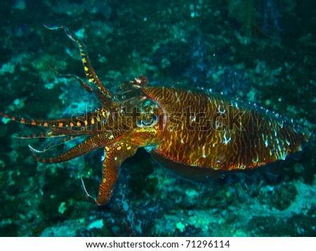 Underwater at sipadan. - stock photo
