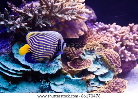 Underwater background - fishes and coral. - stock photo