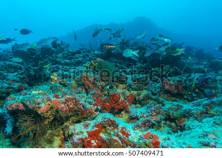 Underwater background with Hard and soft corals on the Indian ocean bottom, Maldives