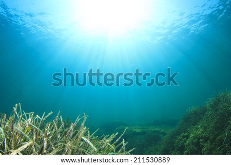 Underwater background with seaweed and sun - stock photo