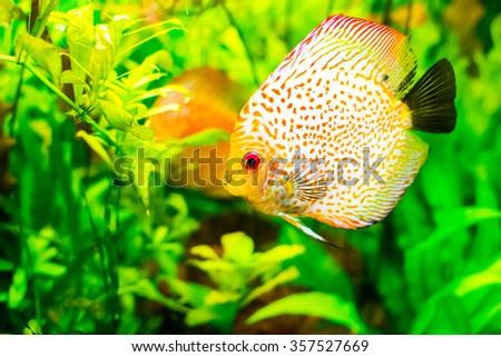 underwater below sea fish water animal reef climate - stock photo