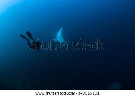 Underwater Blue Sea and diver swimming with manta ray - stock photo