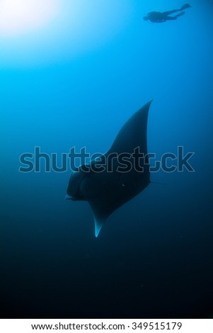 Underwater Blue Sea and Manta Ray