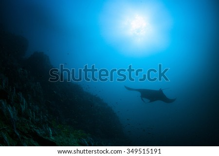 Underwater Blue Sea and Manta Ray - stock photo