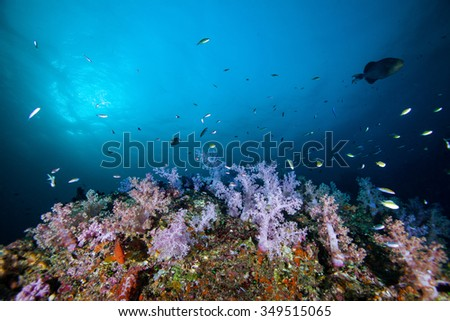 Underwater Blue Sea and soft coral  - stock photo