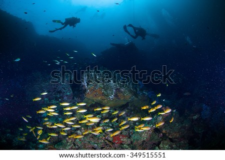 Underwater Blue Sea and yellow runner traveler fish in group  - stock photo