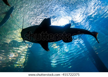 Underwater bottom-top silhouette of a big catfish - stock photo