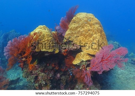 Underwater colorful rich tropical reef with sponges and corals. Blue ocean water and coral reef. Scuba diving in the sea on the reef.