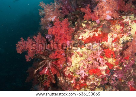 underwater colorful soft coral in nature ocean