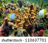 Underwater colors of sponges, brittle star, and tropical fish in a coral reef, Caribbean sea - stock photo