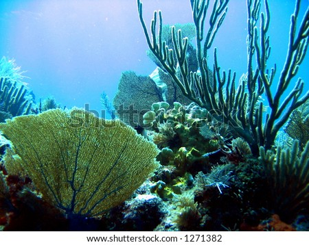 Underwater composition of coral off Key Largo, Florida - stock photo