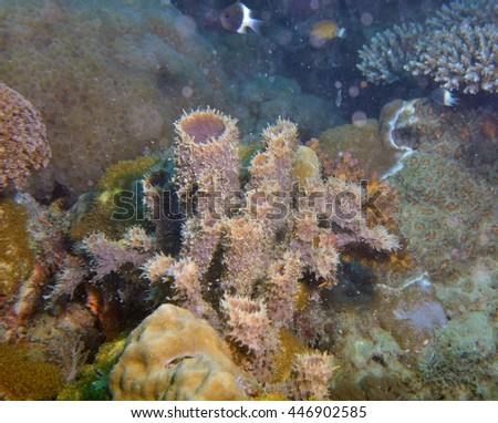 underwater coral - stock photo