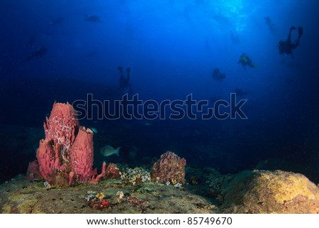 Underwater coral and fish - stock photo