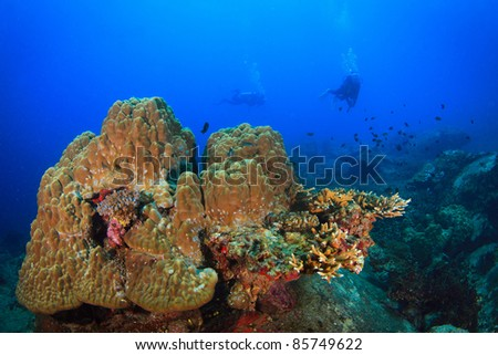 Underwater coral and fish and diver - stock photo