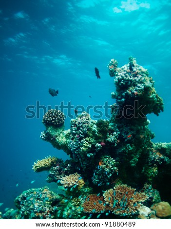 Underwater coral composition with fishes swimming around - stock photo