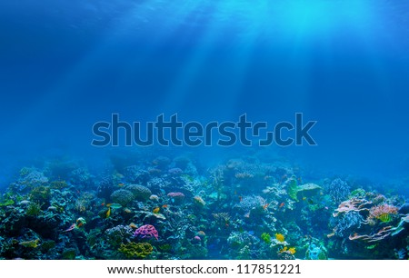 Underwater coral reef background - stock photo