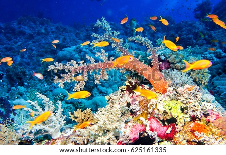 Underwater coral reef fish shoal landscape