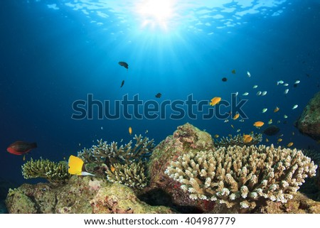 Underwater coral reef in sea with tropical fish - stock photo
